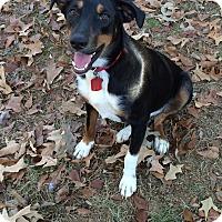Adopt A Pet :: Honey - Greeneville, TN