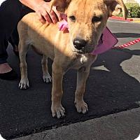 Adopt A Pet :: Princess - San Diego, CA