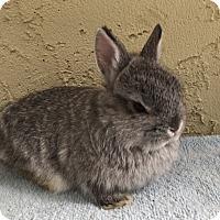 Adopt A Pet :: Silver - Bonita, CA