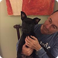 Adopt A Pet :: SKY - KITTERY, ME