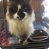 Adopt A Pet :: Dreama - Baltimore, MD