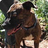 Adopt A Pet :: Gemma - Sacramento, CA