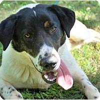 Adopt A Pet :: CHATHAM - Wakefield, RI