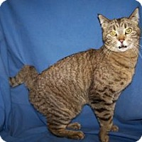 Adopt A Pet :: Dulce - Colorado Springs, CO