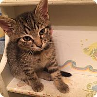 Adopt A Pet :: Abbie - Richmond, VA