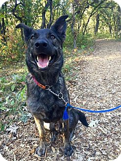 German Shepherd Dog Mix Dog for adoption in Winnipeg, Manitoba - REMI