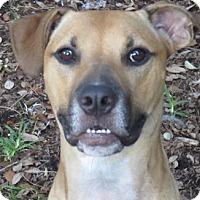 Adopt A Pet :: RooRoo ~ Video Social Outcast - St Petersburg, FL