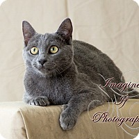 Adopt A Pet :: Kainan - Crescent, OK