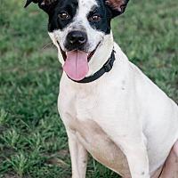 Adopt A Pet :: Bob - Bonaire, GA