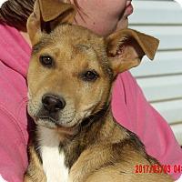 Adopt A Pet :: Gemma (15 lb) Video! - Sussex, NJ