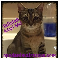 Adopt A Pet :: Tallulah - Christiana, TN