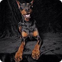 Adopt A Pet :: Lana - Van Nuys, CA