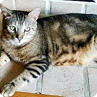 Adopt A Pet :: Jesse - New Kensington, PA