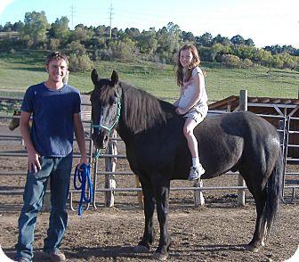 Mustang/Quarterhorse Mix for adoption in Durango, Colorado - Seven