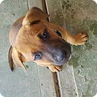 Adopt A Pet :: Barney - Bakersfield, CA