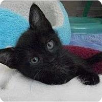 Adopt A Pet :: Lon - Reston, VA