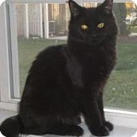 Adopt A Pet :: Clancy - Reston, VA