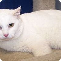 Adopt A Pet :: Ghost - Colorado Springs, CO