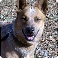 Adopt A Pet :: Rusty - Siler City, NC