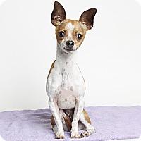 Adopt A Pet :: Gidget - Oakland, CA