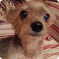 Adopt A Pet :: Angel - Jacksonville, FL