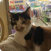 Adopt A Pet :: Ginger - Monroe, GA