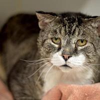 Adopt A Pet :: Major - Park City, UT