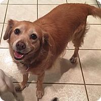 Adopt A Pet :: Scruffy - Homestead, FL
