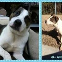 Adopt A Pet :: Joseph - Beaumont, TX