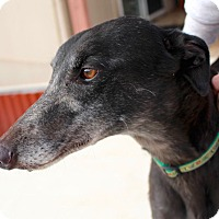 Adopt A Pet :: Fergie - Tucson, AZ