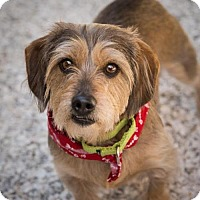 Adopt A Pet :: Lucy - St. Petersburg, FL
