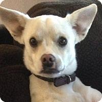 Adopt A Pet :: TRIXIE - Gustine, CA