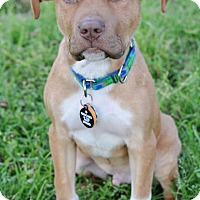 Adopt A Pet :: Rusty - College Station, TX