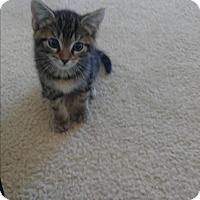 Adopt A Pet :: Dexter - Hollywood, FL