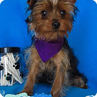 Adopt A Pet :: Sterling - Irvine, CA