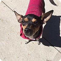 Adopt A Pet :: Jelly - Rexford, NY