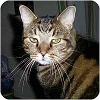 Adopt A Pet :: Edward - Phoenix, AZ