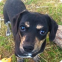 Adopt A Pet :: *Emma - PENDING - Westport, CT