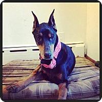 Adopt A Pet :: Lucy - bridgeport, CT
