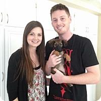 Adopt A Pet :: Tutti - Sacramento, CA