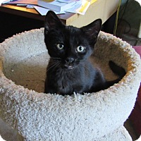 Adopt A Pet :: Merlin - Southington, CT