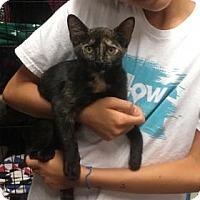 Adopt A Pet :: September - Centerville, GA