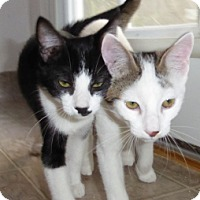Adopt A Pet :: Atticus and Stenson - Mission Viejo, CA