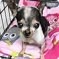Adopt A Pet :: Mimi - Tavares, FL