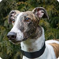 Adopt A Pet :: Jail - Seattle, WA