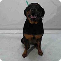 Adopt A Pet :: STAR - Orlando, FL