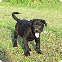 Adopt A Pet :: VANDY - Bedminster, NJ
