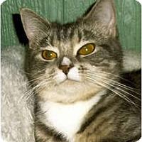 Adopt A Pet :: Candy - Medway, MA