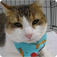 Adopt A Pet :: Ginger - Brea, CA