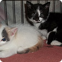 Adopt A Pet :: Martin - Acme, PA